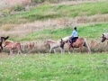 Vyjížďka na koních